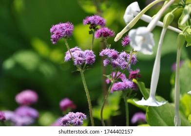 Gardening closeups of flowers in summer