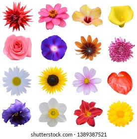 Gardening colorful flowers collage isolated white