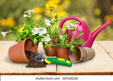 Gardening Equipment, Flower Pot, Flower.