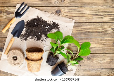 Gardening equipment with plants and soil pile, wooden table Hobbies and leisure, home gardening, Cultivation and caring for indoor potted plants. Replanting the plant into the pot. - Shutterstock ID 1869587149