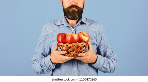Gardening and fall crops concept. Man with beard holds wicker bowl with fruit isolated on blue background. Guy presents homegrown harvest. Farmer in blue shirt holds red apples