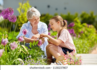 gardening, family and people concept - happy grandmother and granddaughter seeding flowers at summer garden