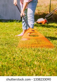 Gardening. Female adult raking green lawn grass with rake tool on her backyard