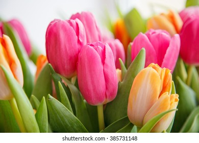 gardening , flowers, advertisement and holidays concept â?? close up tulips