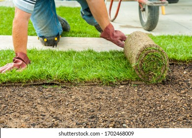 Gardening - Gardener laying sod for the new lawn