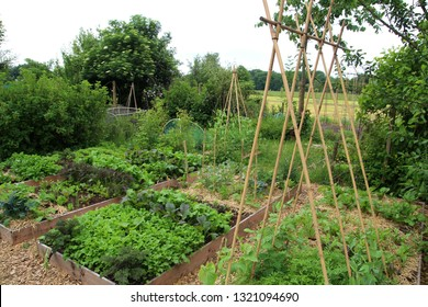 Gardening - Growing vegetables in a editable garden. The vegetables are grown based on permaculture in polycultures in raised beds.