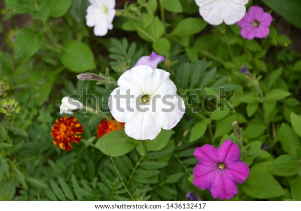 Gardening Home Garden Flower Bed Green Stock Image ... on plants house plants, shade house plants, organic house plants, grass house plants, alpine house plants, greenhouse house plants, seasonal house plants, horticulture house plants, fast growing house plants, pruning house plants, fragrant house plants, hydrangea house plants, cutting house plants, sunflower house plants, rhizomes house plants, blue house plants, fruit house plants, forest house plants, shrub house plants, permanent house plants,