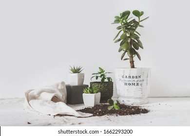 gardening home. Girl replanting green pasture in home garden.indoor garden,room with plants banner Potted green plants at home, jungle,Garden room, Home gardening, Plant room, Floral decor.