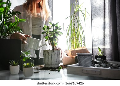 gardening home. Girl replanting green pasture in home garden.indoor garden,room with plants banner Potted green plants at home, home jungle,Garden room gardening, Plant room, Floral decor. - Shutterstock ID 1669189426
