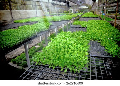Gardening Hydroponics