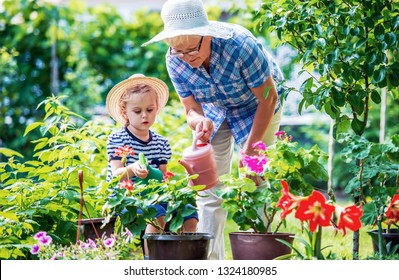 Gardening with kids. Grandmother and her grandchild enjoying in the garden with flowers. Hobbies and leisure, lifestyle, family life