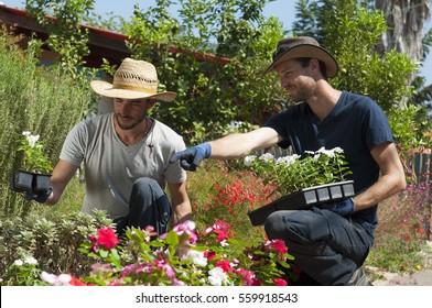 Gardening, Landscape Architecture