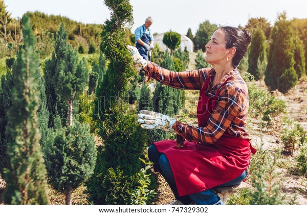 Gardening in nursery. Senior woman cutting a tree in a garden, using shears, wearing professional outfit. Focused on work. Blur senior man in background