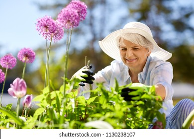 gardening and people concept - happy senior woman with pruner taking care of allium flowers at summer garden