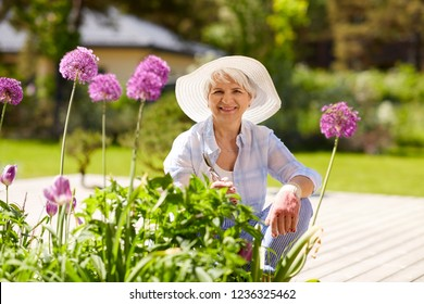 gardening and people concept - happy senior woman with pruner taking care of flowers at summer garden