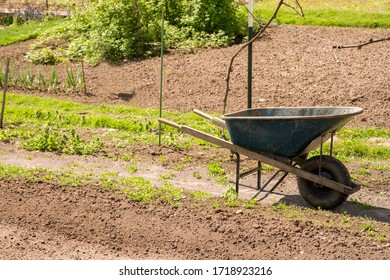 Gardening photo of plants growing and a wheelbarrow off to the side.