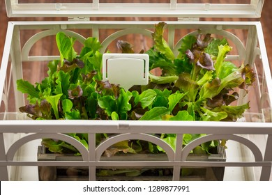 Gardening and planting concept - small hothouse with plants and seeds