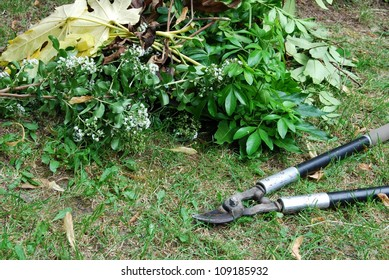 Gardening pruning loppers and pile of leaves on grass