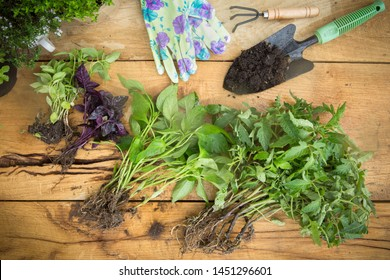 Gardening - Set Of Tools For Gardening, Flower Pots and seedlings on the wooden planks, natural light