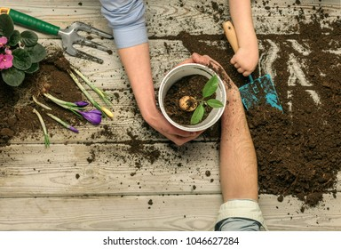 Gardening. Spring came. new flowers. Work for the whole family. Family weekend. Mom, Dad and son or daughter. A child with parents together makes a new home garden