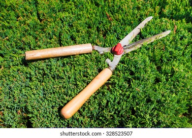 Gardening tool to trim hedges and bushes. Gardening shears.