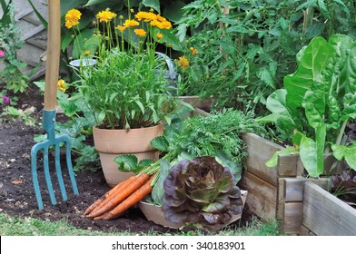 gardening tool in a vegetable garden  with carrots and salad on the ground