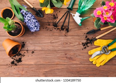 Gardening tools and colorful flowers on the wooden background. Copy space. Top view and flat lay.
