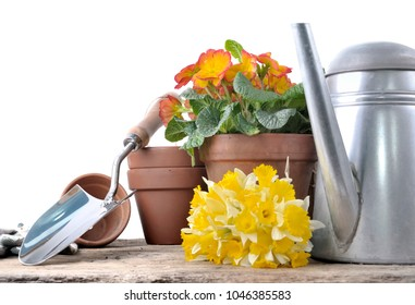 gardening tools with daffodils and flowerpot on a plank on white background