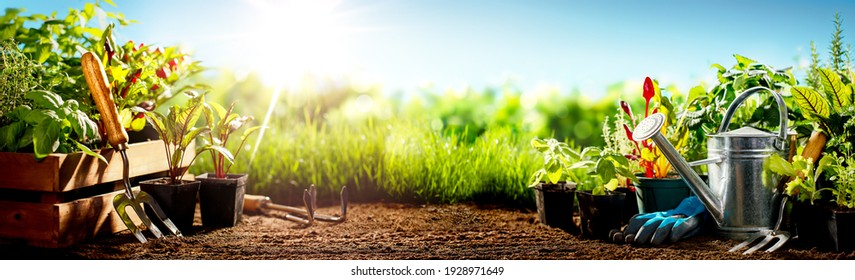 Gardening tools and flowers on meadow at sunny day - Shutterstock ID 1928971649