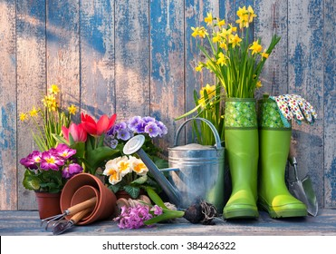 Gardening tools and flowers on the terrace in the garden - Shutterstock ID 384426322