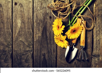 Gardening tools, flowers, rope, brushes and gardening gloves on vintage wooden table. Spring, summer or garden concept background with free text space. Toning.