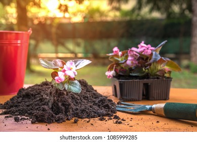 Gardening Tools, Flowers and Soil on a Table in a Garden at Sunset