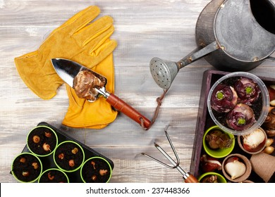 gardening tools on old wood table