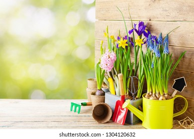 Gardening tools and seedling of spring flowers for planting on flowerbed in the garden. Horticulture concept. Bokeh background with clean space for text.