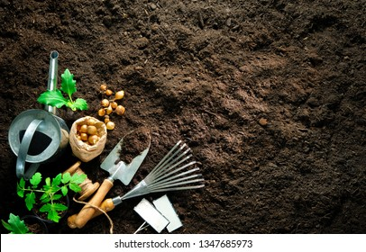 Gardening tools and seedlings on soil. Spring in the garden