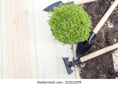 Gardening tools and small plant on wood background with space for text.