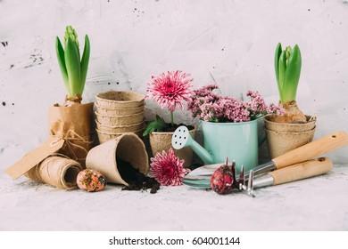 Gardening tools. Spring background