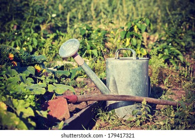 gardening tools: watering can, hoe in the garden (Vintage style)