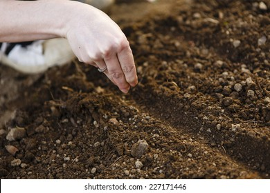 gardening, woman hand in the garden