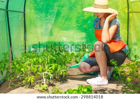 Gardening. Woman working in garden watering seedling tomato plants in greenhouse