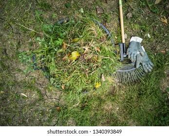 Gardening work, cutting grass and cleaning the garden