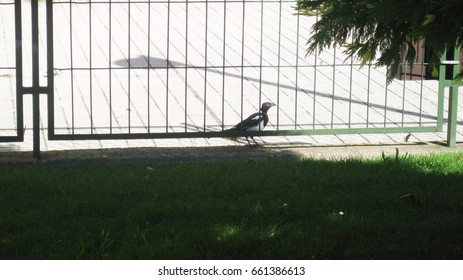Gardens, streets and birds.