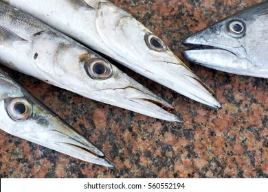 Picture Of A Gar Fish | Garfish Images Stock Photos Vectors Shutterstock