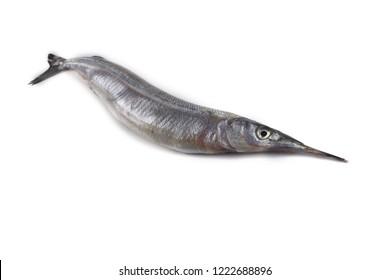 Garfish isolated on white