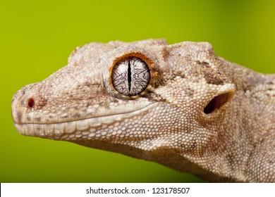 Reptile Eye Images Stock Photos Amp Vectors Shutterstock