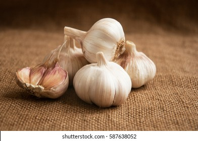 Garlic. Garlic Cloves and Garlic Bulb on vintage burlap . Garlic bulbs with  cloves on  burlap background., concept healthy lifestyle.