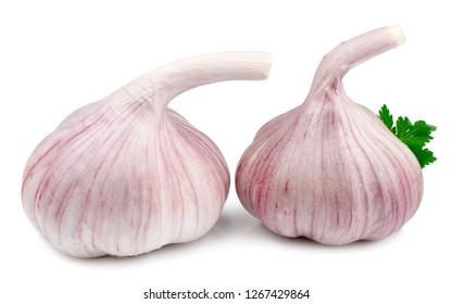 Garlic on white background isolated.