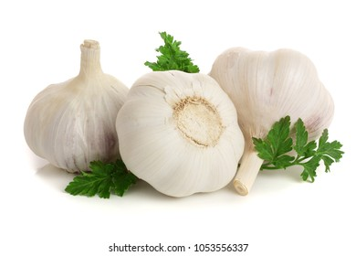 garlic with parsley leaf isolated on white background.