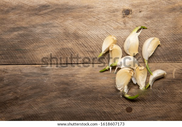 garlic sprouts seedlings ready to plant