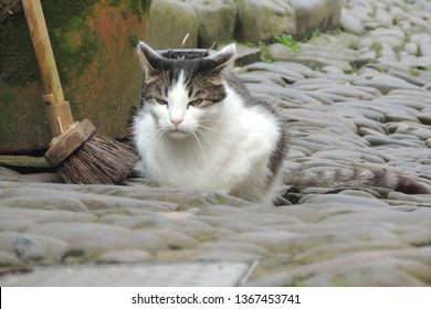 A garrulous cat in Clovelly in North Devon
